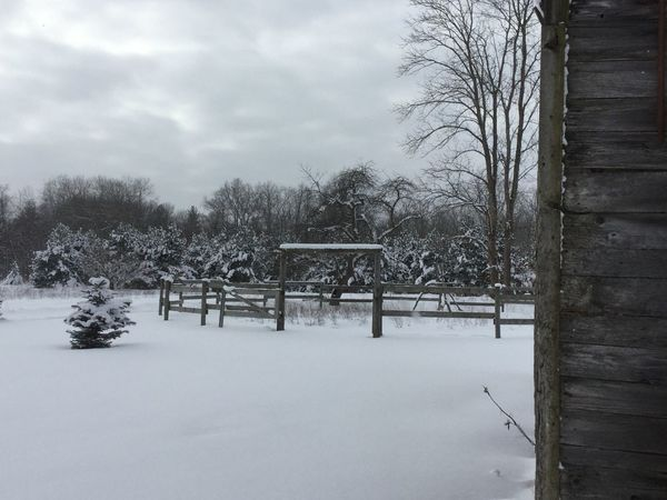 Snowy corral Bare Tree Bench Branch Cold Cold Temperature Corral Covering Empty Outdoors Park Season  Snow The Way Forward Tree Tree Trunk Weather Winter Winter Corral Winter Scene