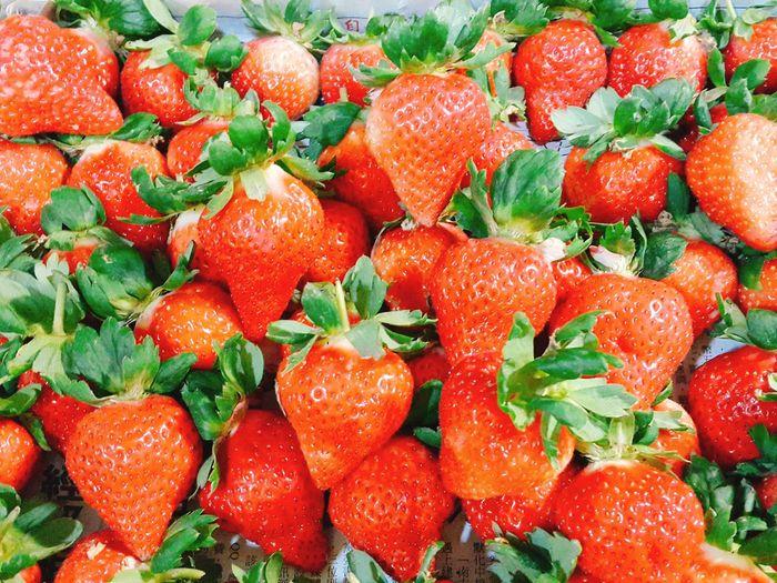 又到了草莓的季節 Fruit
