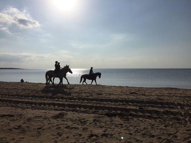 Horse Domestic Animals Sand Sky Beach Horseback Riding Sea Silhouette Riding Horizon Over Water Nature The Week On EyeEm This Week On EyeEm. Westcoast Of Sweden Sept 2017 Water Sunlight Tranquility Late Summer Frösakull