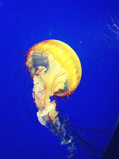 i actually took this photo when we went to the aquariummm
