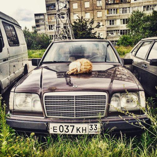Cat Mercedes Sleeps Beautiful VSCO