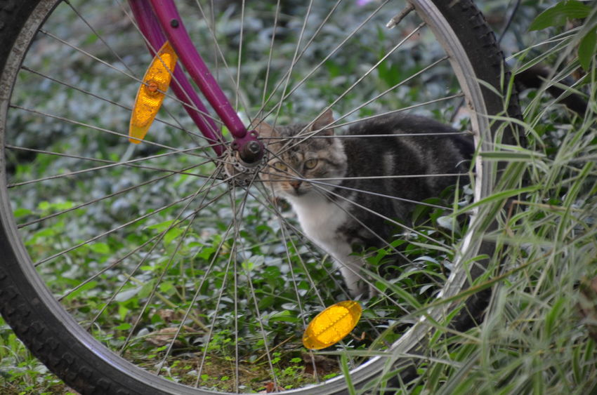 Animal Themes Bicicle Bird Close-up Day Domestic Animals Domestic Cat Feline Flower Grass Mammal Nature No PeoplePet Portaits One Animal Outdoors Pets