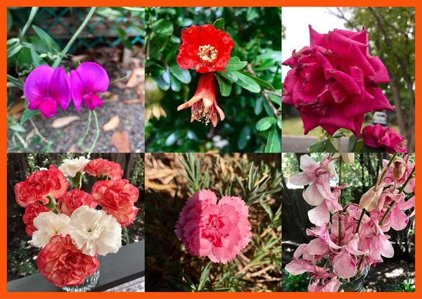 Flower collage 🌹🍃🐜🌺💐🍁 Flowersinthewild Ants Abugslife Antlife Insects  Bunchofflowers Flowers In Vases Flowerphotography EyeEm Best Shots Flowers Of EyeEm FlowerCollage💐 Nature Beautiful 🍃🌺🌹🌼💐🍂🍁🐜