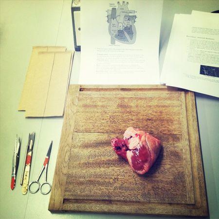 Heart Organ Knife Dead