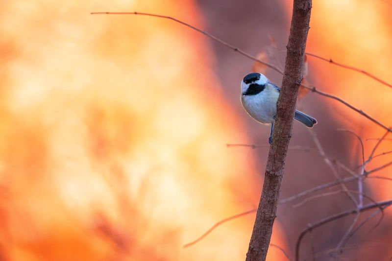 Close-up of bird perching on tree during sunset