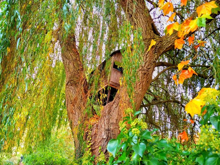 Low angle view of lizard on tree