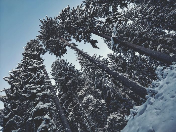 The Great Outdoors - 2018 EyeEm Awards Adventure Light And Shadow Nature_collection EyeEm Nature Lover Eye4photography  Nature Snow Winter Tree Low Angle View Sky Outdoors EyeEm Best Shots Wintertime Winter Trees Cold Day Beauty In Nature Growth Branch