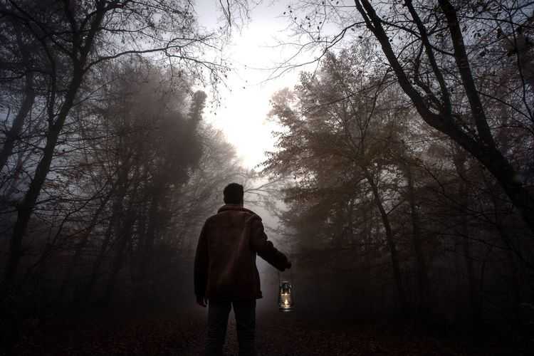 Rear View Of Man With Oil Lamp Standing Amidst Trees In Forest During Foggy Weather