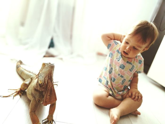 My mate #iguana #reptile EyeEm Selects Childhood Bedroom Child Domestic Life Home Interior Domestic Room Sitting Bed Pets Crawling Domestic Animals