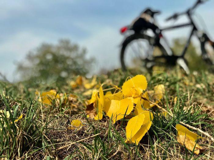Plant Yellow Nature Transportation Land Vehicle Mode Of Transportation Growth