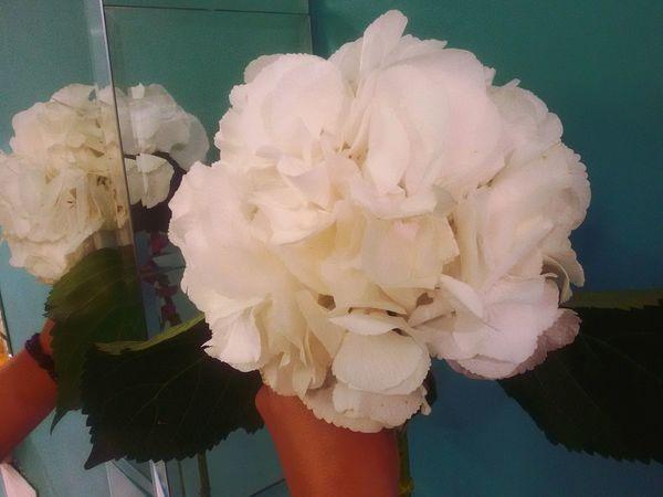 Hydrangea Hydrangeas Florist Flover
