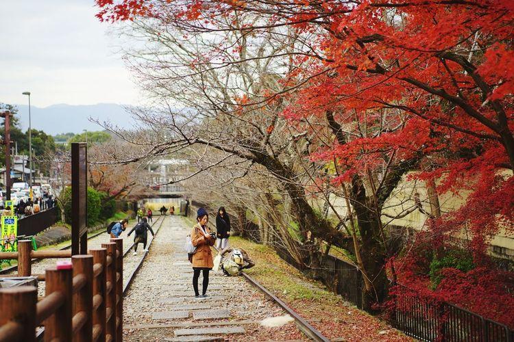 Rear view of woman walking on autumn tree