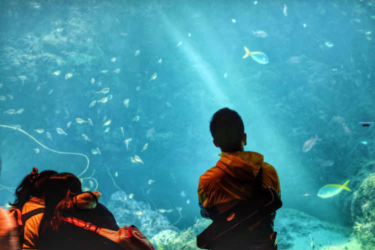 Rear view of people looking at fish in aquarium