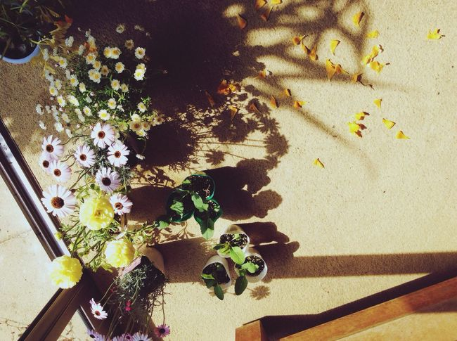 High Angle View Indoors  Table No People Flower Freshness Day