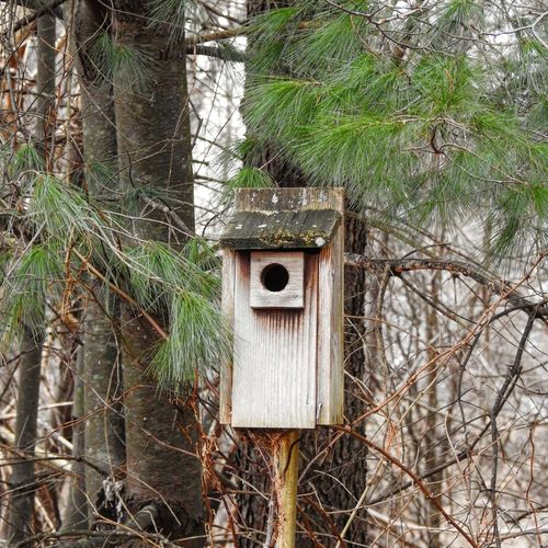 nesting box. Wooden Bird House Wooden Nesting Box Nature Photography Pine Tree Pine Needles Green Color Box Bird Photography Bird Box Birding Winter Autumn Fall Beauty Nature Center Tree Branch Architecture Built Structure Plant Birdhouse Tree Trunk Shelter Growing Young Plant Plant Bark Woods Bark