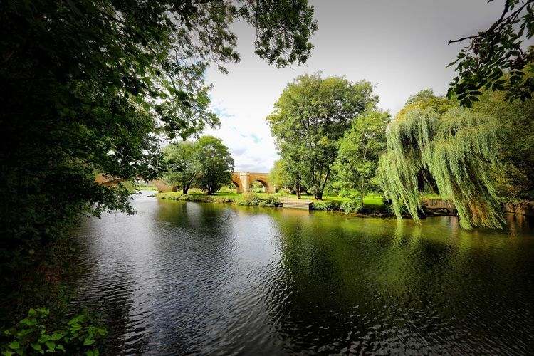 Wansford Tree Plant Water Beauty In Nature Nature Tranquility Green Color