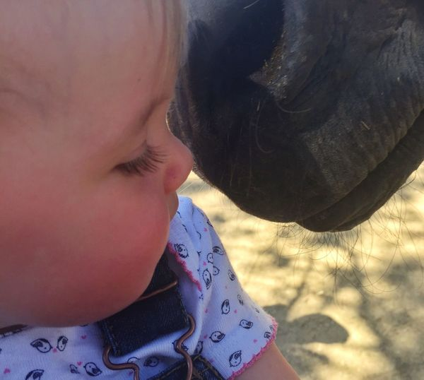 Baby meets Horse Horse Baby Face To Face Affectionate Streamzoofamily Learning Real People One Person Childhood Baby Day Close-up Lifestyles Outdoors Human Body Part People Animal Nose Close Up Baby Girl Horse Photography  Pet Portraits This Is Family This Is Family