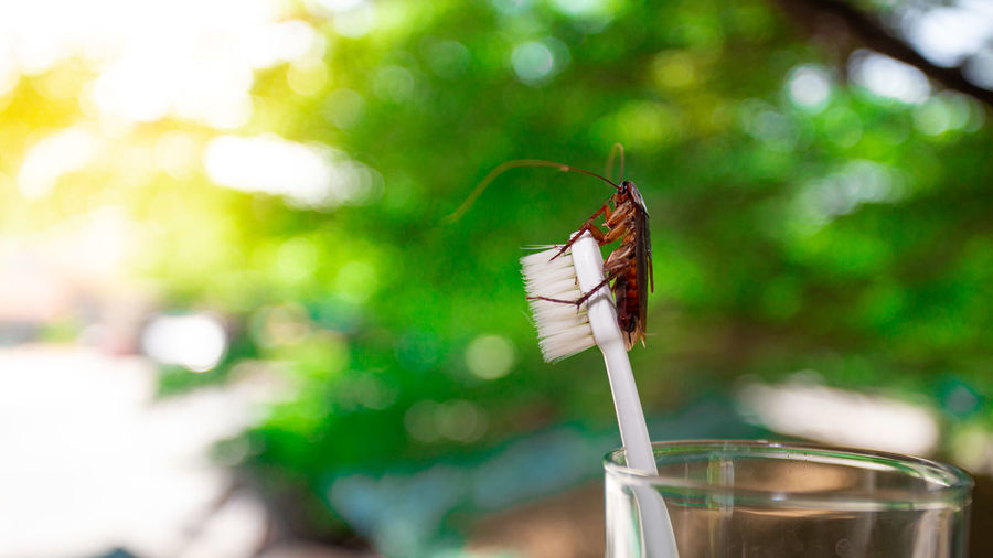 Focus On Foreground Close-up Day Nature Invertebrate Animal Themes Drink Green Color Plant Animal No People Glass Freshness Insect Selective Focus Outdoors Food And Drink Refreshment Animal Wildlife
