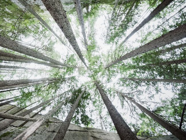 Tree Forest Nature Low Angle View Beauty In Nature No People Break The Mold TCMP Outdoors StawamusChief British Columbia EyeEmNewHere