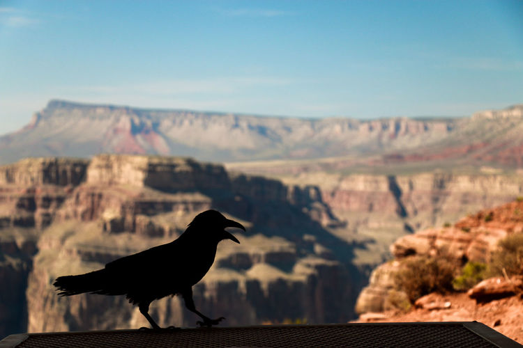 Silhouette of bird against canyons