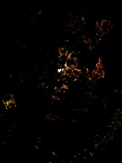 Night No People Backgrounds Black Background Tree Nature Outdoors Flowers Trees And Sky Beautiful Nature Silhouette Light