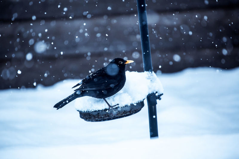 Bird perching on feeder during winter