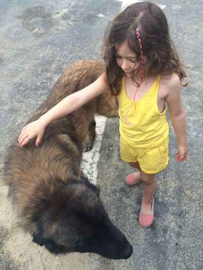 Childhood One Animal Child Full Length Pets Casual Clothing Kind Sintra Dog Hund Wild Dog Straßenhund Friendship Nature Respect Stroking Wildlife Wild Animal Wild Animals Up Close Courage Curly Hair Mädchen Girl Jumpsuit Fashion It's About The Journey My Best Photo #NotYourCliche Love Letter