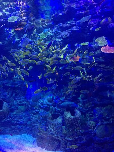 Under The Sea Fish Aquarium Large Group Of Animals Underwater Fish UnderSea Sea Life Blue Water Nature Sea Beauty In Nature Animal Themes
