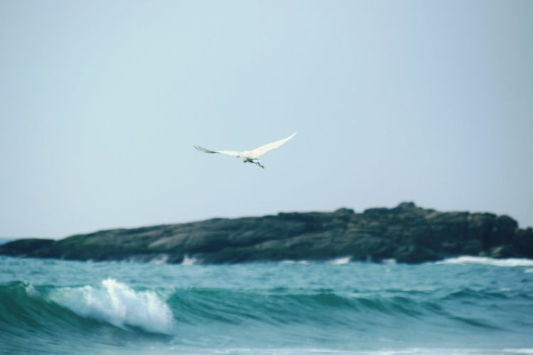 Flying high against the waves... Beach Sea Flying Outdoors Nature Wave Bird Water Animal Themes Beauty In Nature Day Sky No People