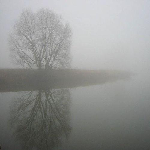 the fog 😱 Fall Autumn Lake Fog Foggy Falltime Season  Seasons Instafall Instagood Instaautumn Photooftheday Autumnweather Fallweather Nature Tree