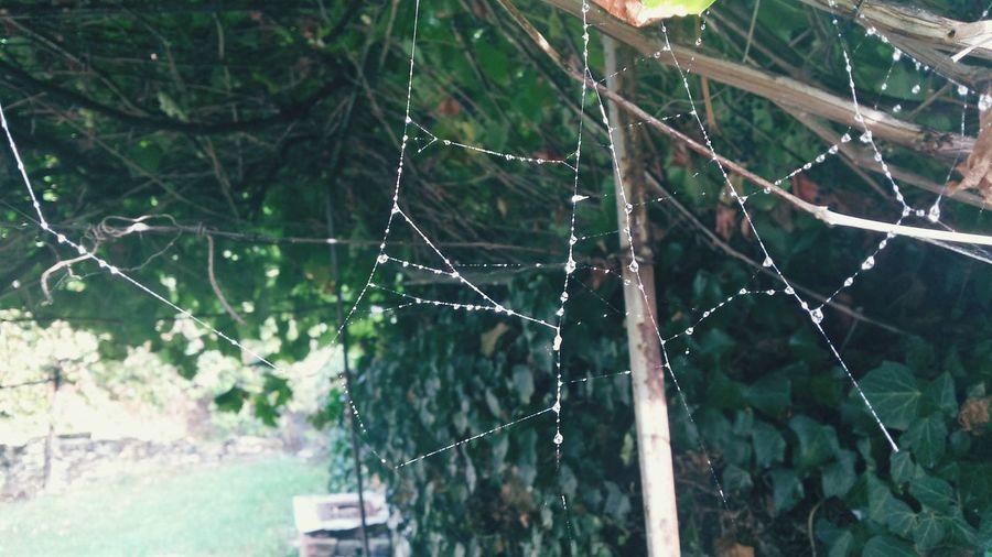 Rain Raindrops Spider Web Fruška Gora Jazak