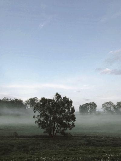 F O G Czech Republic Foggy Fog Plant Tree Sky Field Tranquility Beauty In Nature Land