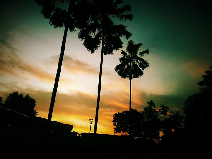 Sunset Cloud - Sky Nature Palm Tree No People Tree Silhouette Sky Tree Trunk Outdoors Beauty In Nature Tree Area Day