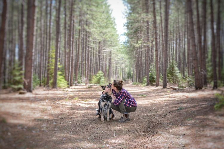 Forest Togetherness WoodLand Adult Tree People Outdoors Adventure Rural Scene Hiking Dog Friendship Women Nature Day Pinaceae EyeEm Best Shots Australian Cattle Dog Domestic Animals Tree Trunk Healthy Lifestyle WoodLand Tree Pets Beauty In Nature The Portraitist - 2017 EyeEm Awards
