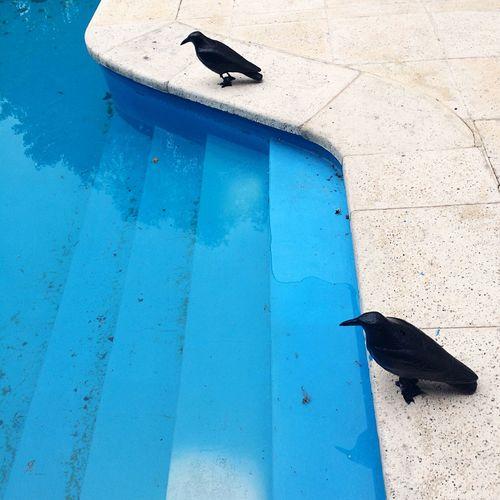 Fake Bird EyeEm Selects Bird Animals In The Wild Animal Themes One Animal Animal Wildlife Perching Raven - Bird Wildlife Zoology Day Crow High Angle View Vertebrate No People