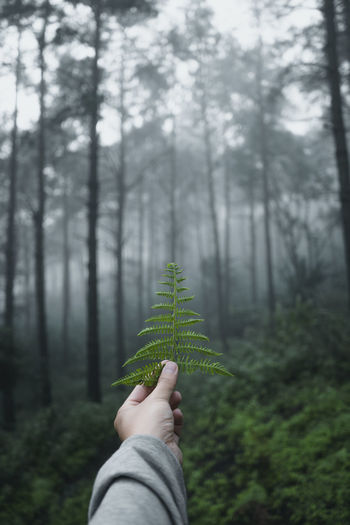 Cropped hand holding plant in forest
