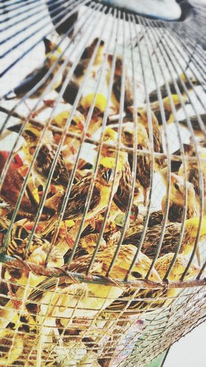 Let them out to freedom. Birds Birdcage Imprisoned Protect Freedom