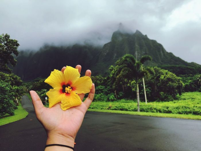 Hawaii Plant Flower Nature Beauty In Nature One Person Tree Holding First Eyeem Photo