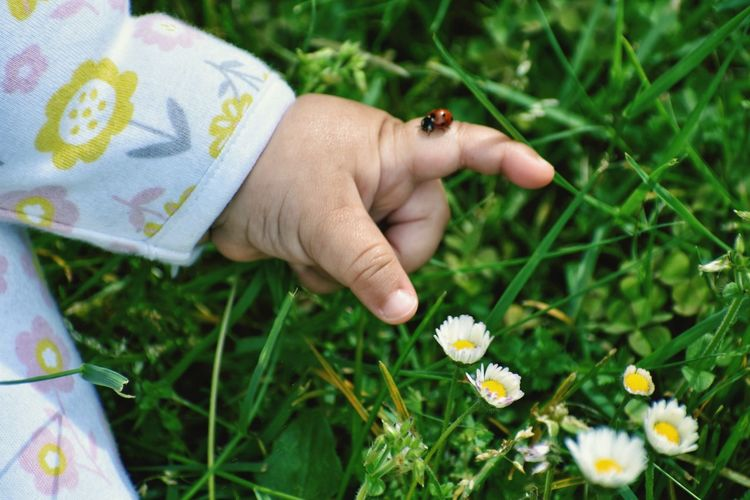 Midsection Of Child With Ladybug On Finger