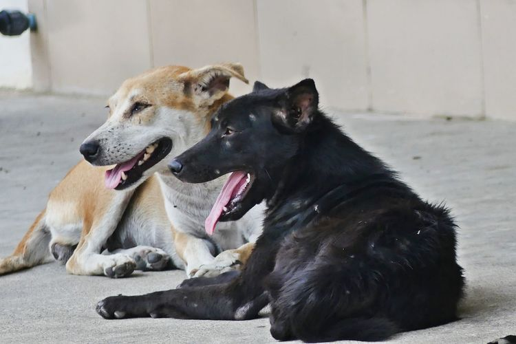Thai Street Dog Animal Themes Day Dog Dog Love Dog Nap Dog Walking DogLove Doglover Dogoftheday Dogs Dogslife Domestic Animals Feral Dogs Mammal No People Outdoors Pets Stray Dog Street Dog Thai Dog Thai Dog Nap Thai Street Dog สุนัข หมา หมาวัด TCPM