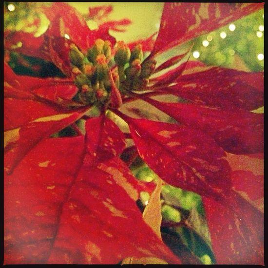 Naples,CA Christmas 2013