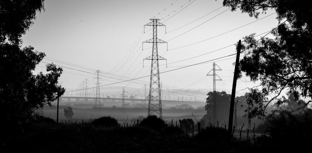 Electricity  Cable Tree Electricity Pylon Technology Connection Fuel And Power Generation Tranquility Day Growth Low Angle View Plant Black And White EyeEm Best Shots EyeEm Nature Lover EyeEm Best Edits My Best Photo