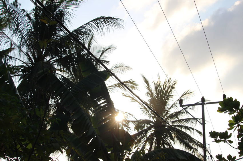 Beauty In Nature Day Growth Leaf Low Angle View Nature No People Outdoors Palm Tree Plant Scenics Sky Sun Sunlight Tree