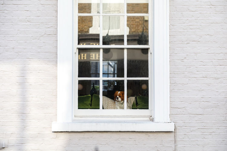 Autumn in London Window Architecture Built Structure Glass - Material Building Exterior Transparent Day Building No People Mammal Animal Animal Themes Outdoors Wall - Building Feature Reflection Pets Wall Domestic Brick Wall Brick Window Frame Dog London Travel Destinations Autumn Autumn Mood