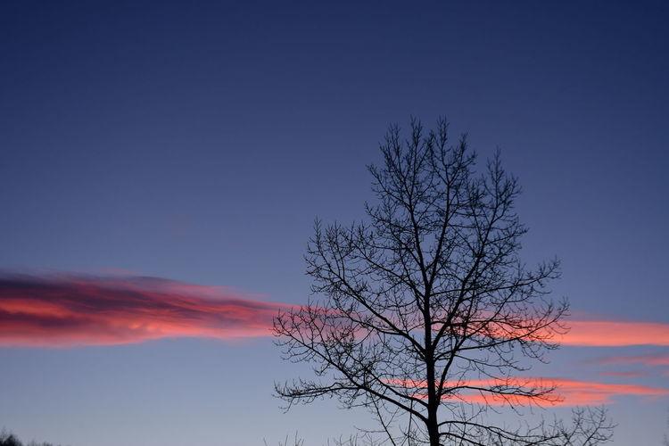 Sky Bare Tree