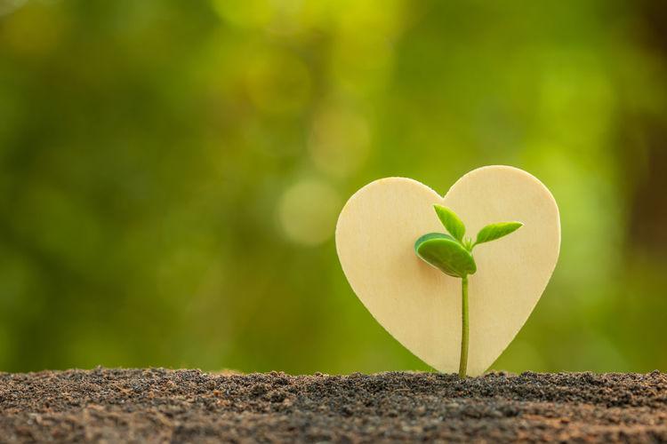 Close-up of heart shape leaf