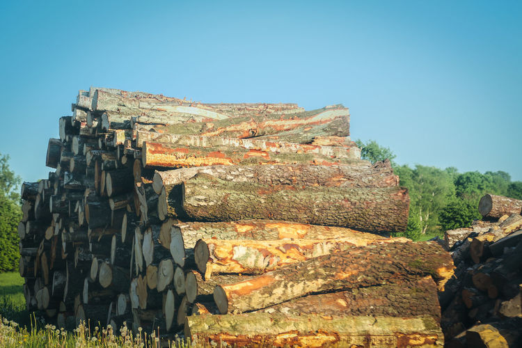 Pile Of Wood Tree Tree Trunk Abandoned Ancient Civilization Architecture Built Structure Clear Sky Copy Space Damaged Day Deterioration Nature No People Old Outdoors Pile Piled Up Rock Ruined Sky Solid Sunlight The Past Tree Area