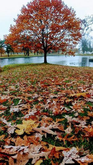 Autumn... EyeEm