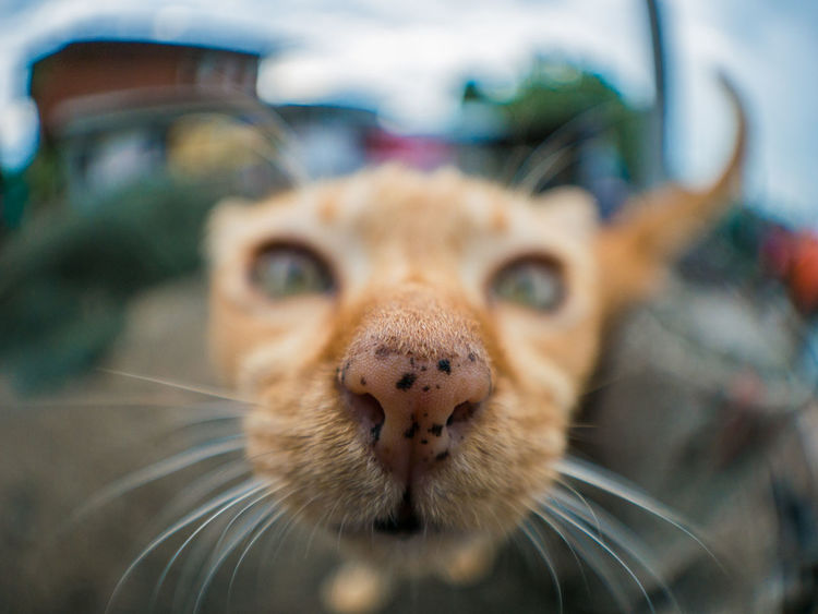 Big nose Cats 🐱 Cat Cats Of EyeEm Close-up Nose Nature Kitten 🐱 EyeEmNewHere EyeEm Cute Cats Kitten Playful