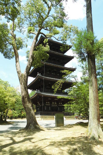 仁和寺 五重塔 日本 Kyoto Japan Beauty In Nature Day Growth Low Angle View Nature No People Outdoors Sky Sunlight Tree